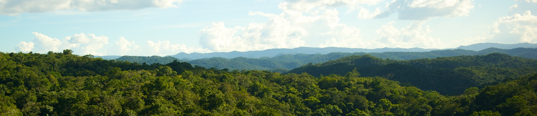Belize's Chiquibul Forest